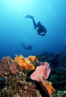 Caribbean-scuba-01