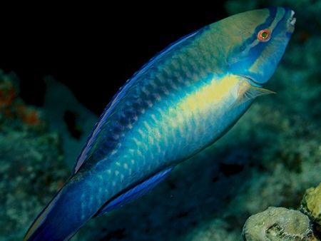 deep sea fish pictures-03