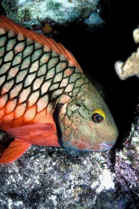deep sea fish pictures-04