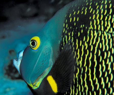 deep sea fish pictures-05