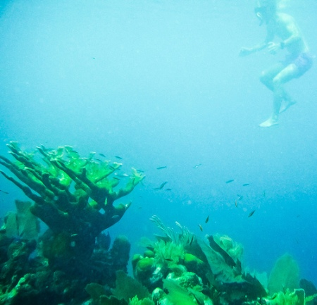 deep-sea-pictures-07