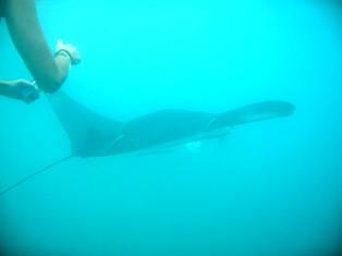 tobago-snorkeling-05