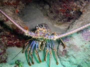 Ocean Life Pictures-05