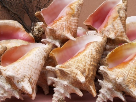 pictures-of-sea-shells-03
