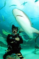 Shark Images