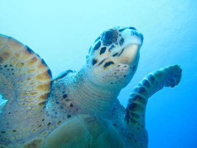 Turks & Caicos, TCI - Awesome Marine Life - Ocean Vibes Scuba & Watersports Ltd