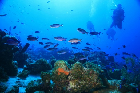 Scuba Dive Sites Curacao