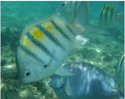 cuba diving holidays