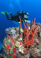 scuba-diving-wallpaper-02