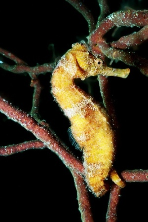 sea-horse-pictures-04