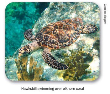sea-turtle-pictures-09