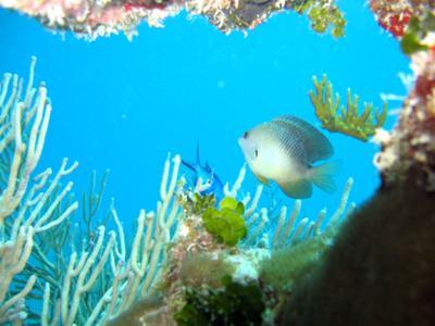 Shoal Bay East Beach, Anguilla - Shoal Bay Scuba (Karma Charters) Ltd. - Coral Reef, Anguilla