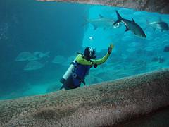Underwater diving jobs scuba instructor jobs scuba dive jobs - Dive instructor jobs ...