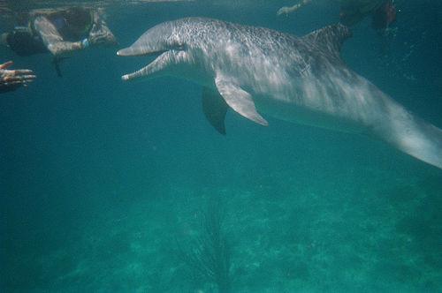 Underwater Dolphin Pictures-03