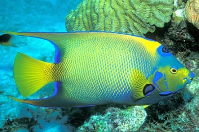 deep sea fish pictures-02