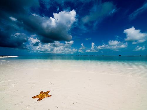 Ocean Life Pictures-03