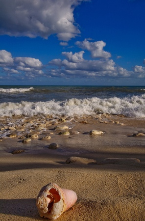 pictures-of-sea-shells-01