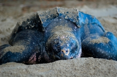 sea-turtle-pictures-03