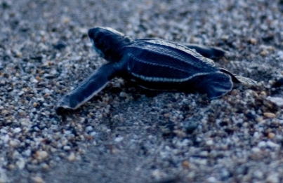 sea-turtle-pictures-08