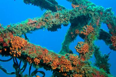 Shoal Bay East Beach, Anguilla - Shoal Bay Scuba (Karma Charters) Ltd. - Wreck , Anguilla