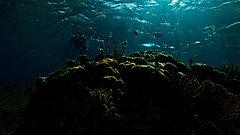 Underwater Desktop Wallpaper